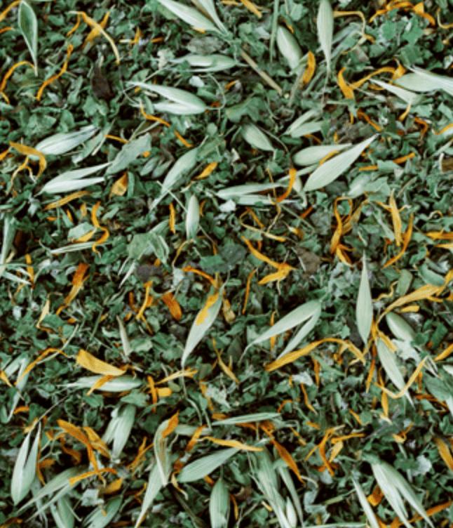 Rejuvenation Tea blend from Zach Woods Farm
