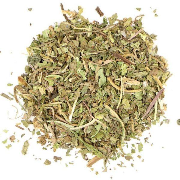 wild lettuce herb